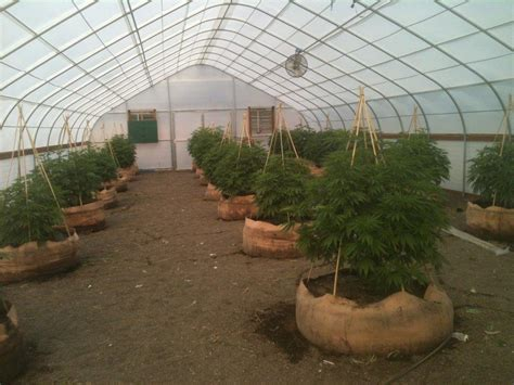 small greenhouse kits solexx greenhouse covering for growing cannabis