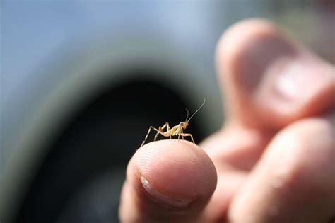 praying mantis birth hole stories