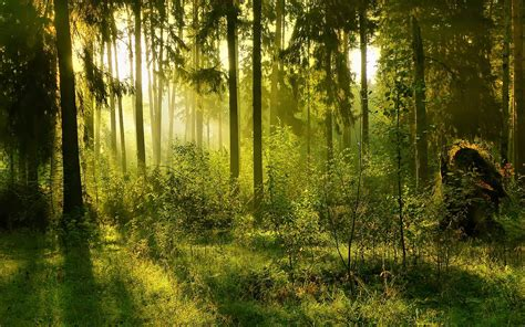 Green Forest Photo by Forest Backgrounds Pictures Wallpaper Cave