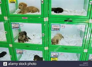 stock photo pet store with puppies for sale shinjuku tokyo japan