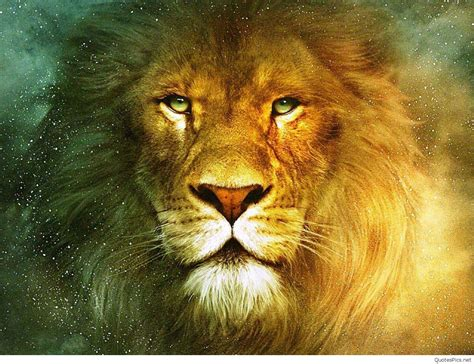 lion hd wallpaper  mobile  group wallpapers
