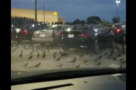 hundreds  blackbirds descend  texas walmart