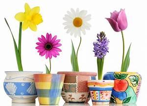 Pot De Fleur Mural : stickers pots de fleur pas cher ~ Dailycaller-alerts.com Idées de Décoration