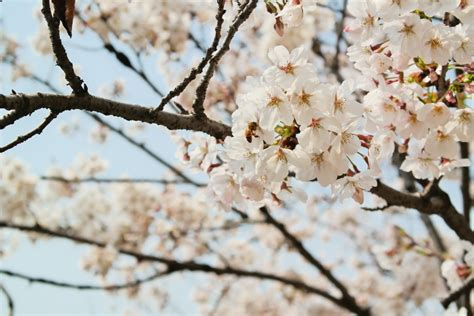 Free Images : branch plant flower food spring produce