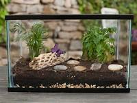make your own terrarium How to Make a Terrarium | how-tos | DIY