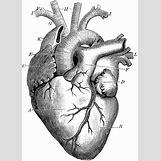 Anatomical Heart Tattoo Black And White | 733 x 1024 gif 234kB