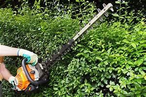 Darf Nachbar Meine Hecke Schneiden : hecken schneiden hecken richtig schneiden zeitpunkt form ~ Lizthompson.info Haus und Dekorationen