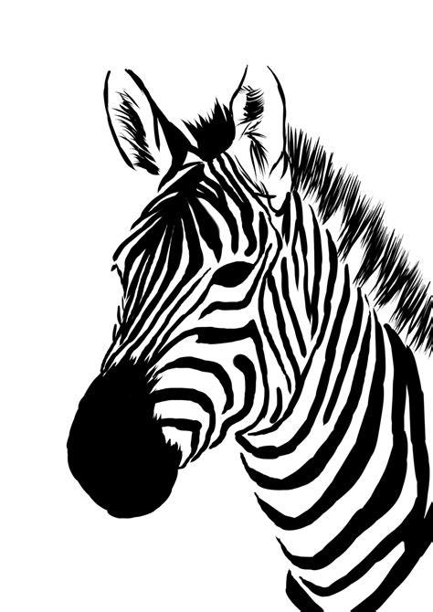drawn zebra pencil   color drawn zebra