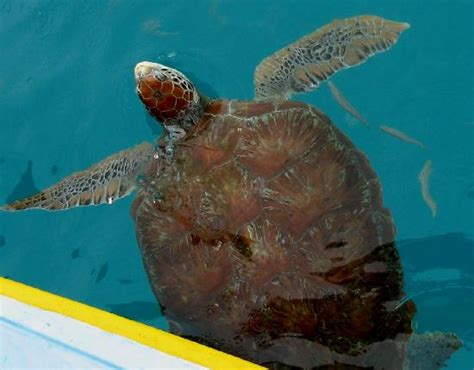 Glass Bottom Boat Tours Barbados by Glass Bottom Boat Tour Picture Of Barbados Caribbean