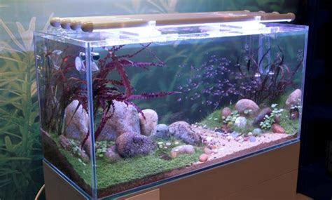 How To Set Up An Aquascape by How To Set Up Lighting In The Aquascape Aquascaper
