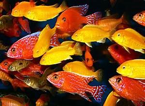 Welche Fische Passen Zusammen Aquarium : haltung ~ Lizthompson.info Haus und Dekorationen
