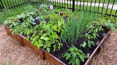 square foot garden square foot gardening maximum yield sunnyside gardens