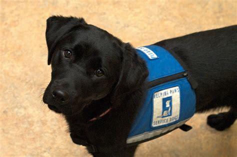 study measures benefits  service dogs  veterans  ptsd