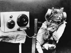 cats songs meow mix why scientists created for cats