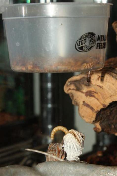 Bearded Feeders by Automatic Worm Feeder Bearded Org