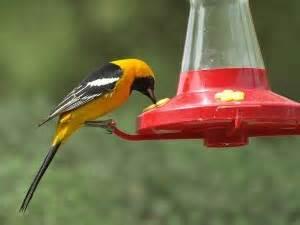diy hummingbird  oriole nectar cheery kitchen