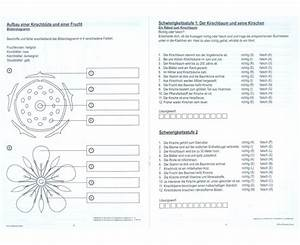 Aufbau Einer Kirschblüte : die kirschbl te von der bl te bis zur frucht ~ Frokenaadalensverden.com Haus und Dekorationen