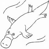 Platypus Coloring Drawing Pages Duck Billed Clipart Wombat Drawings Animals Outline Colouring Australian Animal Stew Draw Aboriginal Painting Clip Dot sketch template