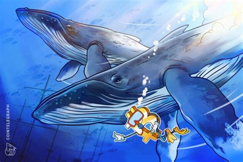 Bitcoin Whale - No, A Whale Didn't Cause Bitcoin To Crash ...