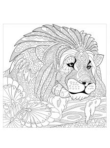 lions coloring pages  adults
