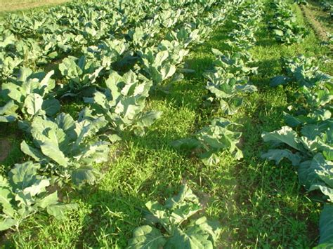 garden cover crop 6 tips to eliminate weeds in your garden patio productions