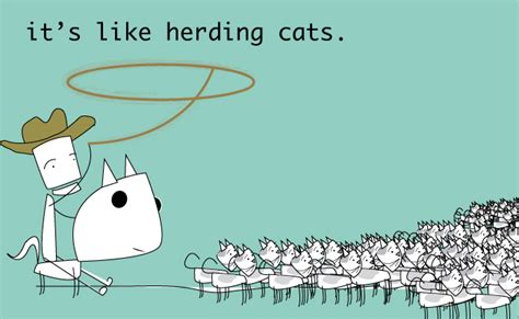 Herding Cats Meme - has change management ever felt like this change management pinterest change management