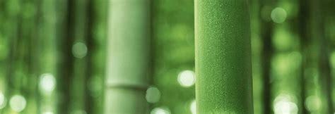 bamboo fibers evaluation  cellulosic fibers  bamboo plants fibrefashion