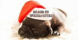 Weihnachtsgrüße Bild Whatsapp : bildergalerie kuriose und ausgefallene bilder zu ~ Haus.voiturepedia.club Haus und Dekorationen