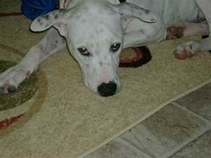 Pierre the Dalmatian Mix's Photo Gallery