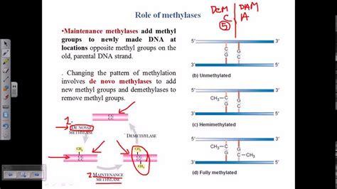 Types Of Dna Methylation
