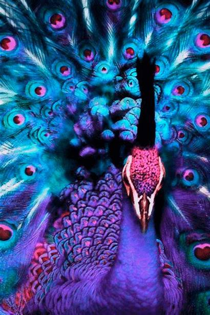 Peacock Purple Magic Mother Nature Theme