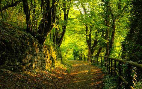 bonito camino bosque wallpaper