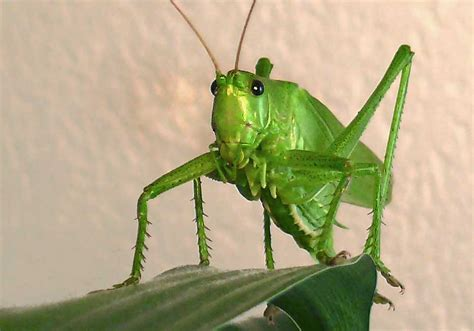 Animals That Are Green