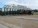Tampa Bay Downs (FL): Hours, Address, Horse Track Reviews ...