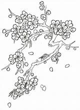 Blossom Cherry Coloring Tree Japanese Drawing Sketch Pages Flower Sketchite источник Tattoo sketch template