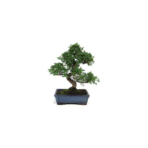 bureau center sarreguemines bonsai d interieur 28 images bonsa 239 d int 233 rieur