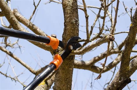 pruning trees home national tree services directory