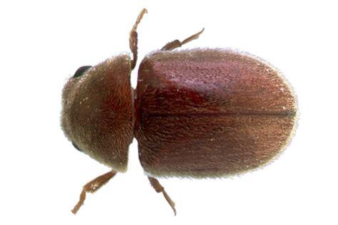 florida common household pests hulett pest control