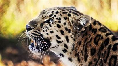 1080p Animals Funny Animal Wallpapers Wallpapersafari Code