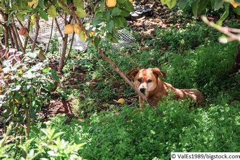 Der Hund Ist Weggelaufen  Tipps Und Vorbeugung • Modern