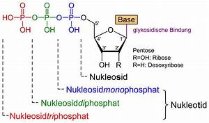 File Nucleotide Nucleoside General Svg