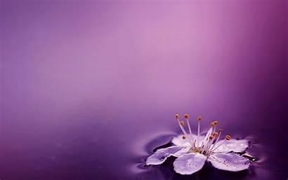 Purple Flower Water Flowers Wallpapers Pretty Background