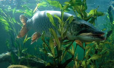 animals  plants lake superior ecosystem