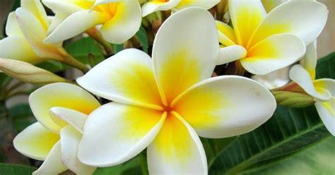 pengertian bunga sempurna tidak sempurna beserta contohnya