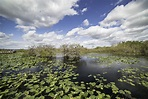 Clouds over the Swamp on the Anhinga Trail image - Free ...