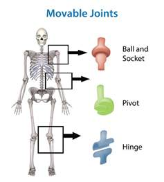 Hinge Joint Examples