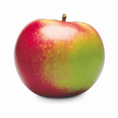 Apple Mcintosh Apples Local Ontario Tomavo 3lbs