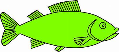 Cooked Fish Cartoon Salmon Clipart