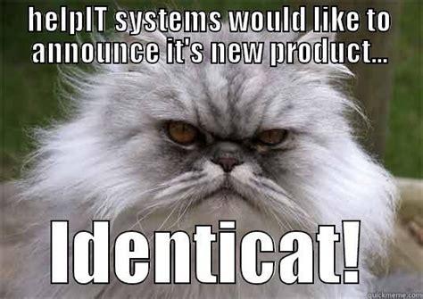 Persian Cat Meme - persian cat memes