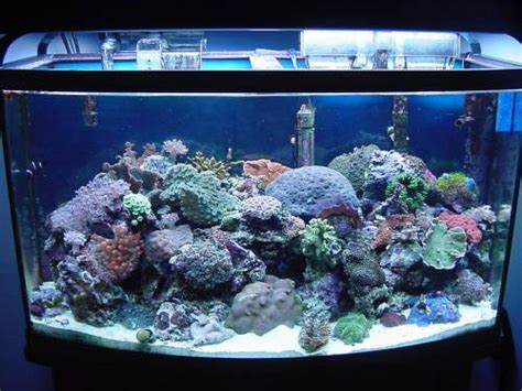 salt water fish tank saltwater aquarium lighting